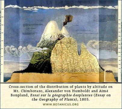 Humboldt, profile of Chimborazo